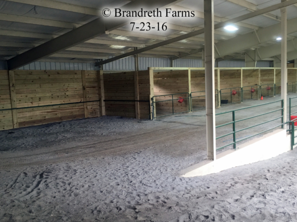 brandreth-farms-7-23-16-2