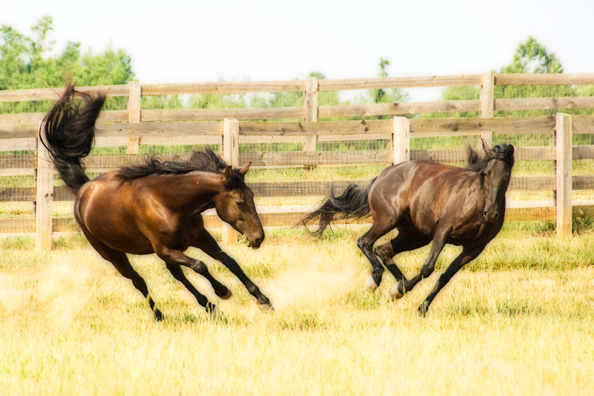Brandreth Farms Horses