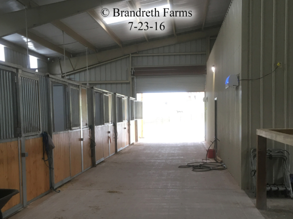 brandreth-farms-7-23-16-3